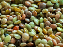 Legumes3_History and tradition.jpg